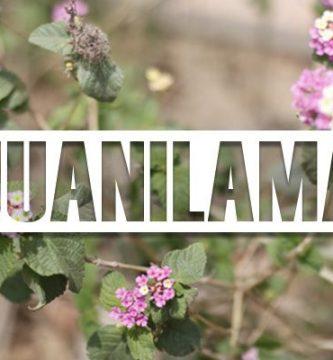 para que sirve la juanilama