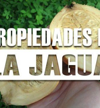 propiedades de la jagua