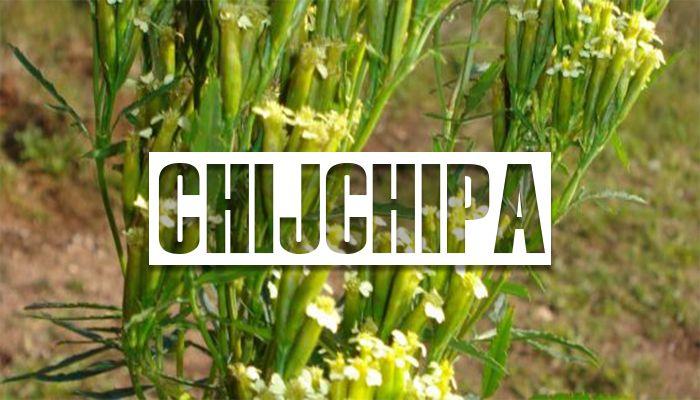 Beneficios de la chijchipa