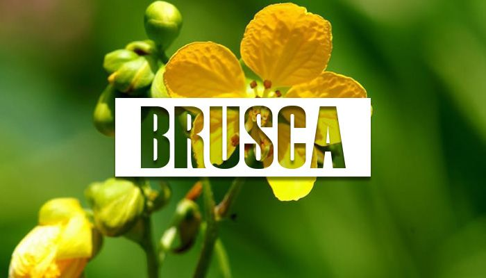 beneficios de la brusca