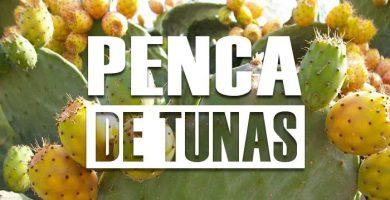 propiedades de la penca de tunas