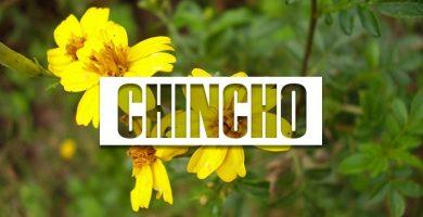 propiedades del chincho
