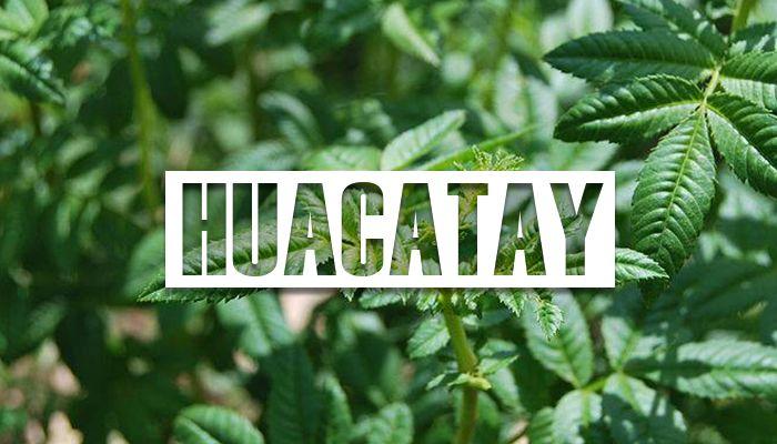 propiedades del huacatay