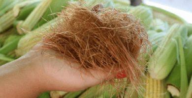 Para que sirven los pelos de elote